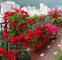 Цветы на лоджии южная сторона