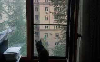 Антикот сетка на окна